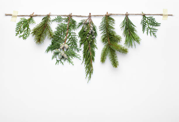 Christmas tree branches on white background. stock photo