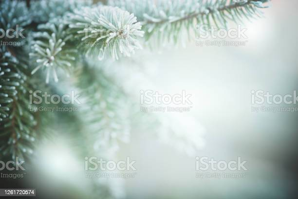Photo of Christmas tree branches with frost outdoors