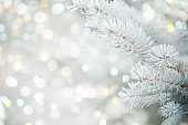 istock Christmas tree branches with frost 1260511128