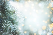 istock Christmas tree branches with frost 1261672780