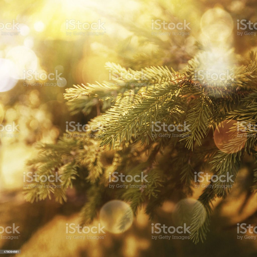 Christmas tree close up royalty-free stock photo
