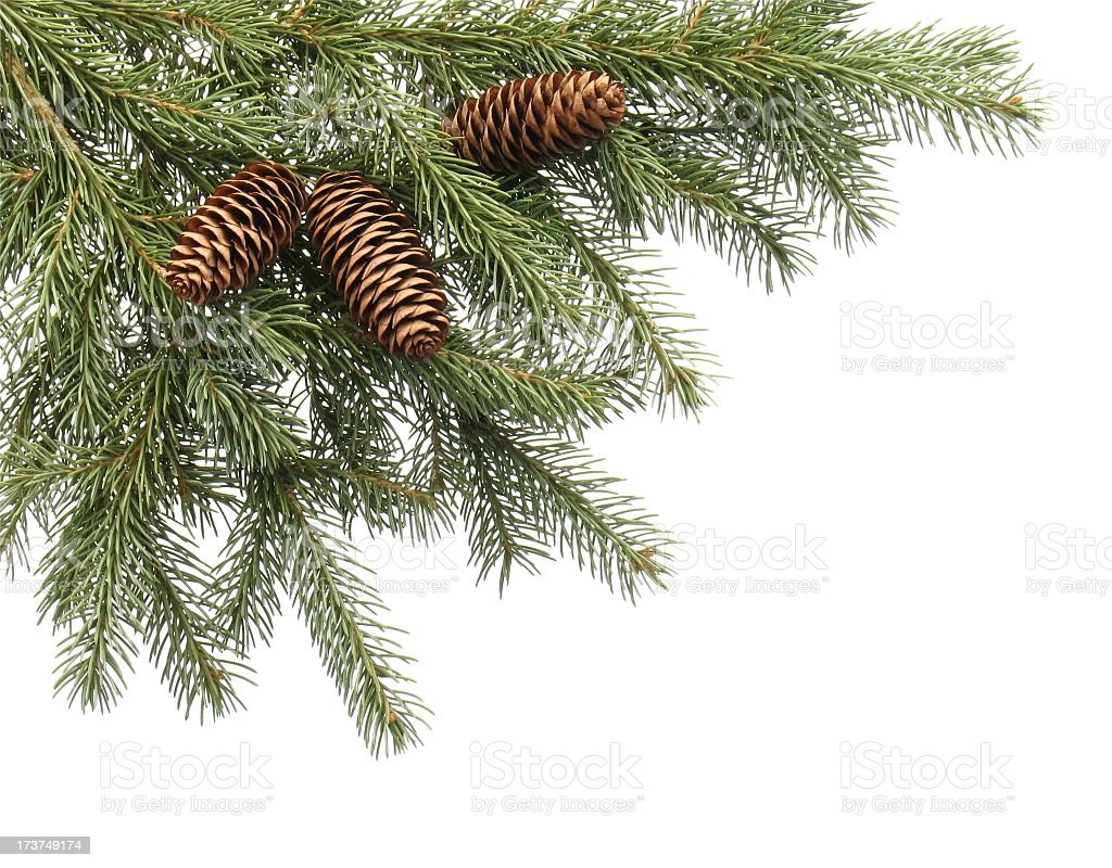 Christmas tree close-up on white background royalty-free stock photo