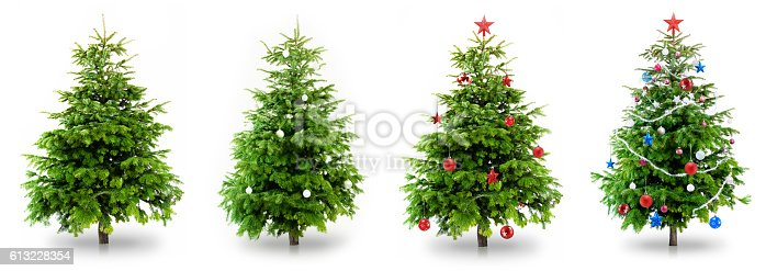 Christmas Trees Isolated on White