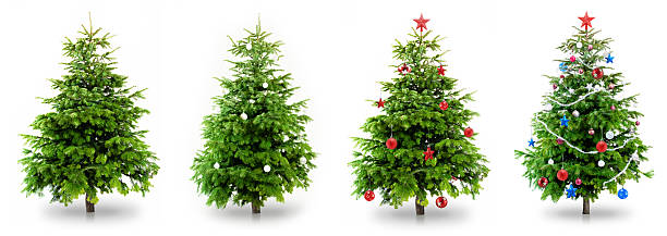 christmas tree collection - christmas tree stock photos and pictures