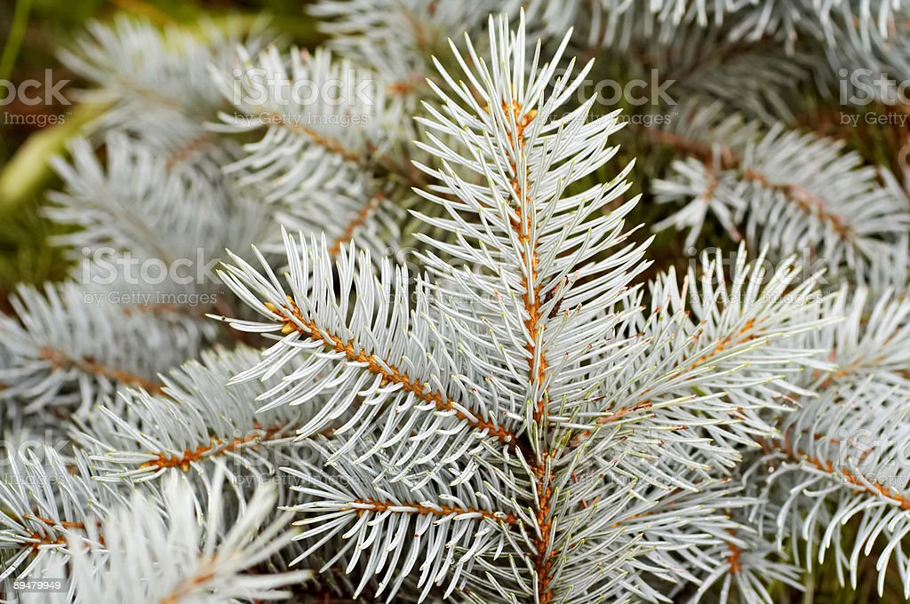 Christmas tree. Decoration. Background. Fir. Needle. royalty-free stock photo