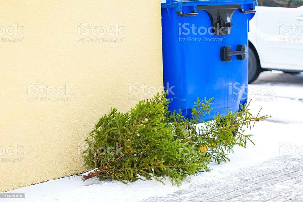 Christmas tree discarded in the trash royalty-free stock photo