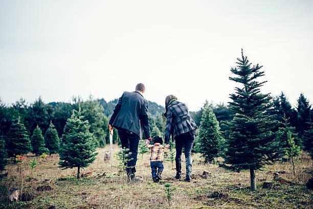 Sapin de Noël de la famille à la ferme - Photo