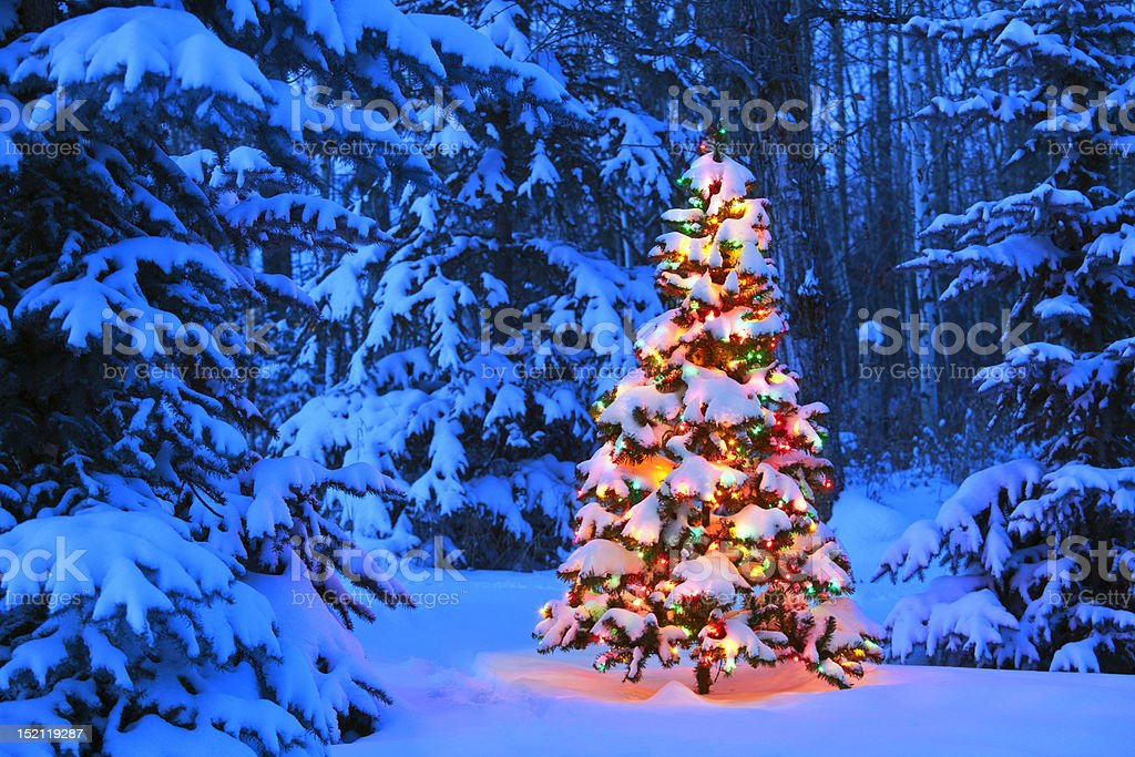 Christmas tree glowing outdoors in the forest stock photo