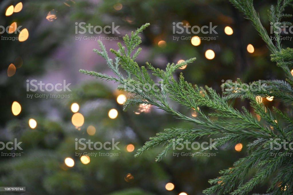 Christmas tree in Denmark stock photo