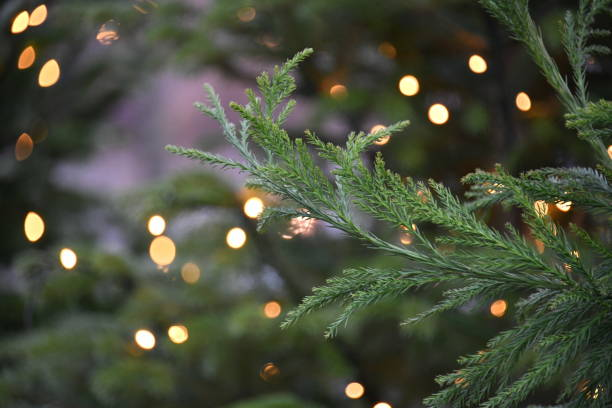 christmas tree in denmark - christmas stock photos and pictures