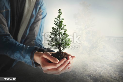 Little fir-tree in the hands. Forest fire protection Live tree in the soil.50 iso