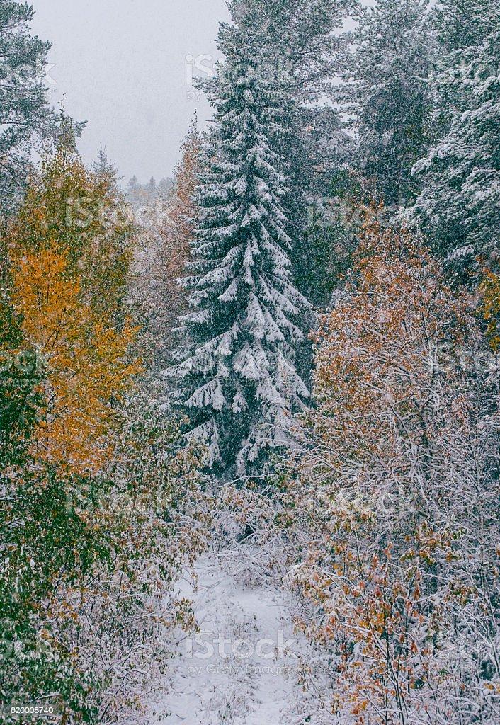 Christmas Tree in Snowy Forest zbiór zdjęć royalty-free