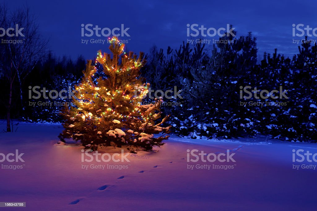 Christmas tree in the forest royalty-free stock photo