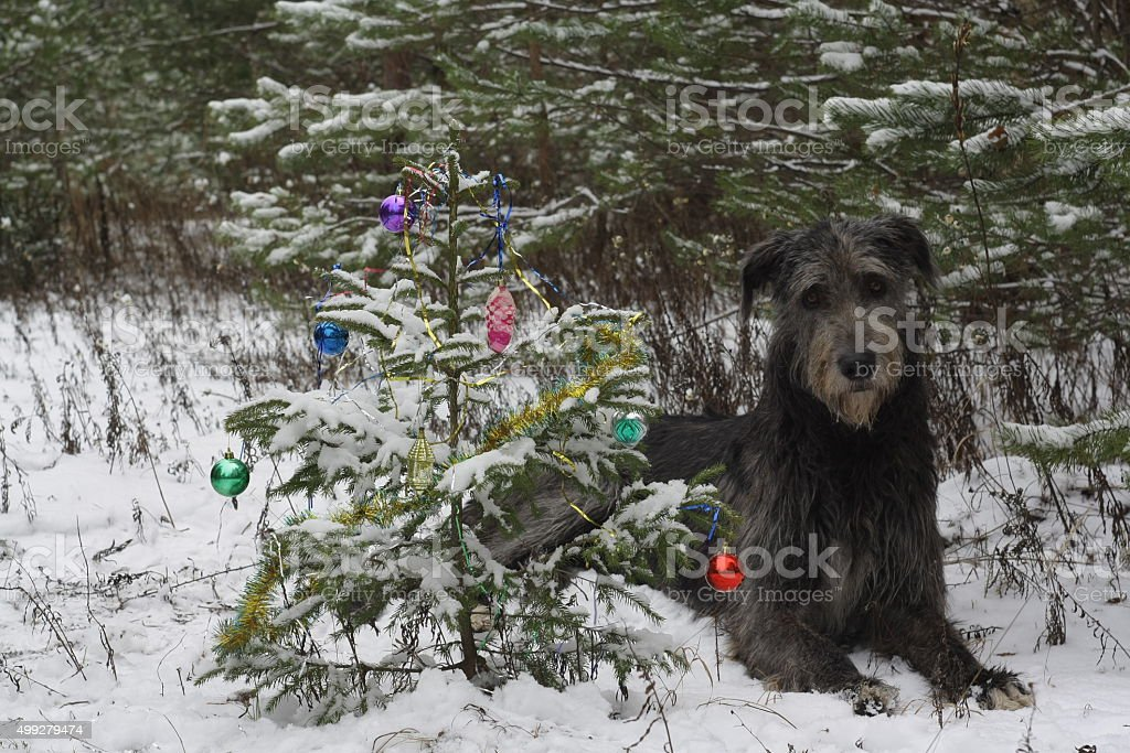 Christmas tree in the forest stock photo