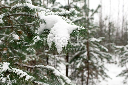 875265254 istock photo Christmas tree in the woods in the snow 621274736