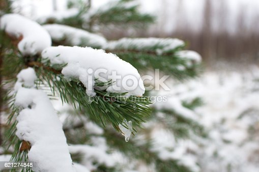 875265254 istock photo Christmas tree in the woods in the snow 621274848