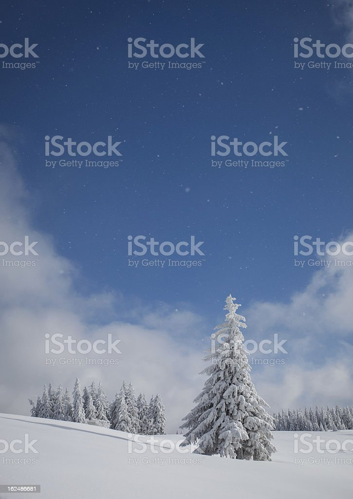 christmas tree in winter royalty-free stock photo