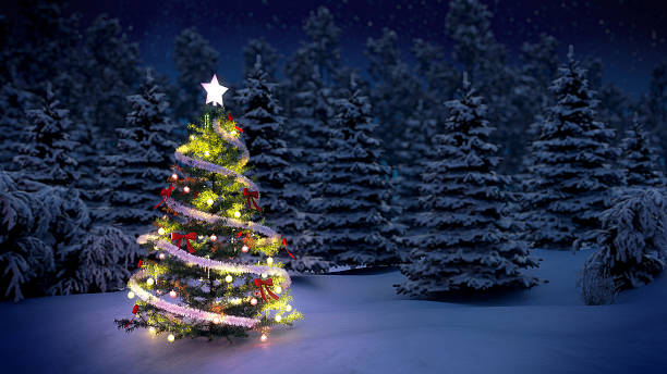 christmas tree in woods - christmas tree stock photos and pictures
