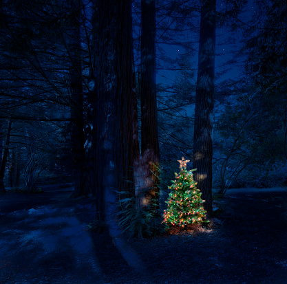 Christmas Tree In Yard At Night In Forest By Redwood Trees ...