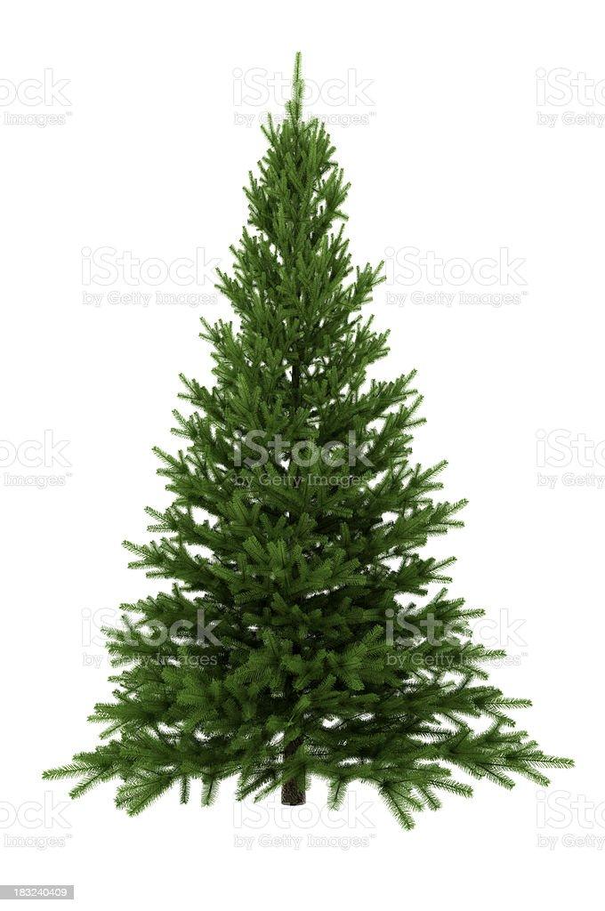 Christmas Tree Isolated on White Background (XXXL) stock photo