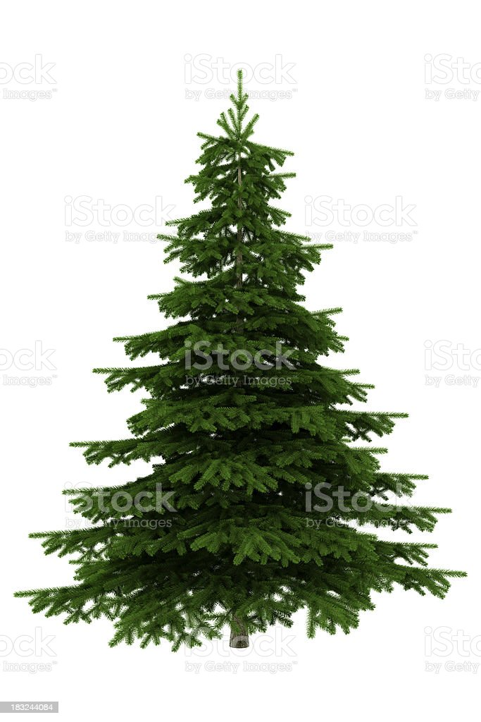 Christmas Tree Isolated On White Background - XXXL stock photo