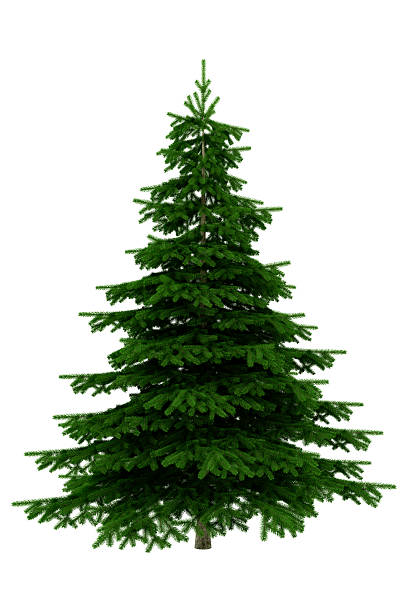 christmas tree isolated on white background - xxxl - ladin ağacı stok fotoğraflar ve resimler