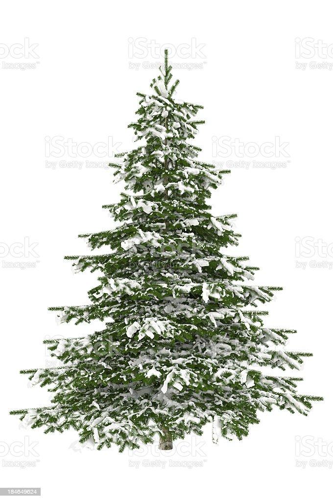 Christmas Tree Isolated on White with Snow (XXXL) royalty-free stock photo