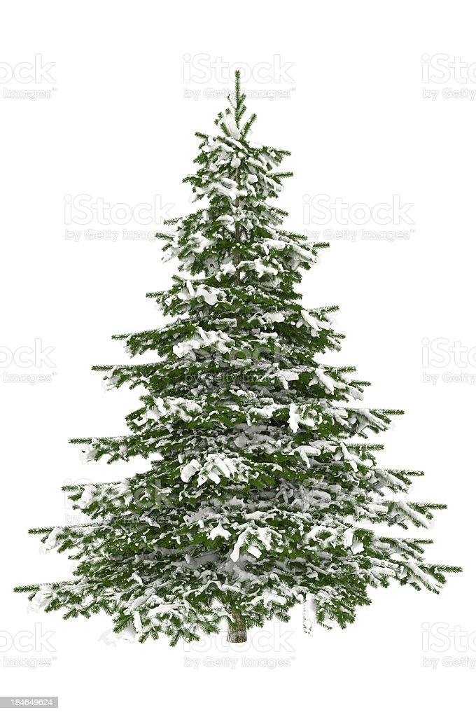 Christmas Tree Isolated on White with Snow (XXXL) stock photo