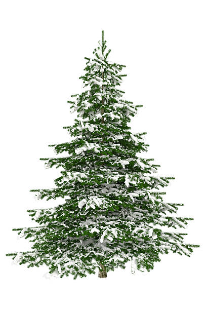 christmas tree isolated on white with snow (xxxl) - fir tree stock photos and pictures