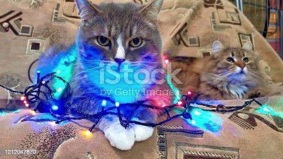istock Christmas tree light on cat 1212047870