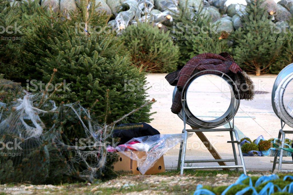 Christmas Tree Lot Stock Photo