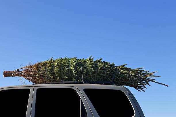 árvore de natal em um automóvel na cobertura - amarrado - fotografias e filmes do acervo