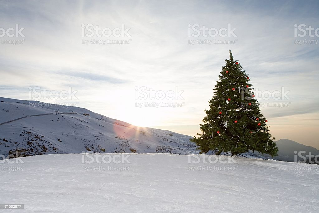 Christmas tree on a mountain royalty-free stock photo