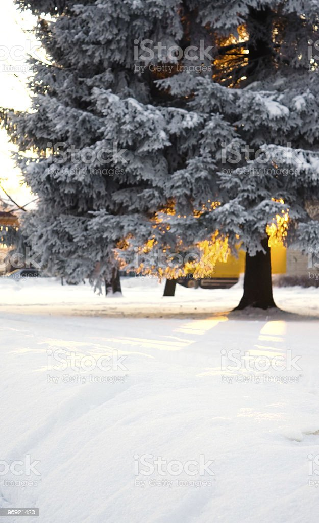Christmas tree on sunset royalty-free stock photo