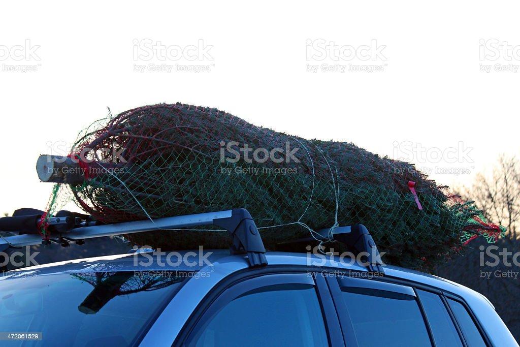 Christmas tree on SUV roof stock photo