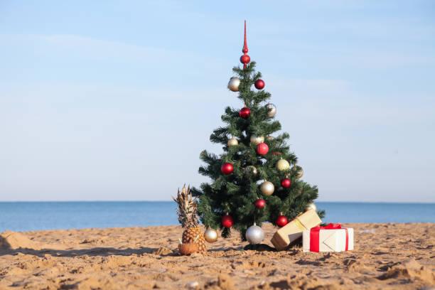 julgran på tropiska solsemestrar - golf sommar skugga bildbanksfoton och bilder