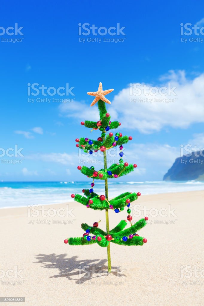 Christmas Tree on Tropical Vacation Beach with Starfish stock photo