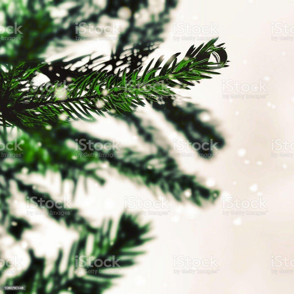 Christmas Tree Or Pine Tree Background Template Stock Photo
