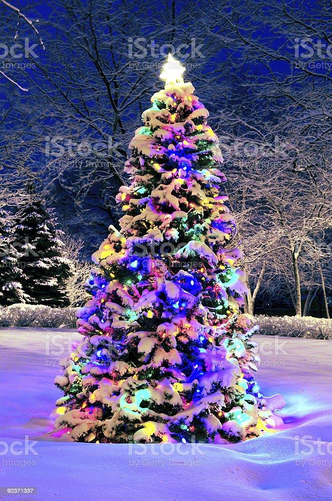 Christmas tree outside royalty-free stock photo