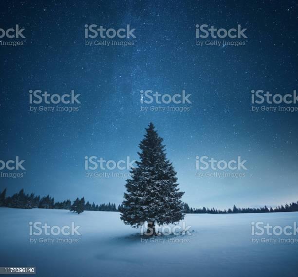 Christmas tree picture id1172396140?b=1&k=6&m=1172396140&s=612x612&h=lbtrmvbt6nq3qhep0qwplfj7m22nanfrphdjlyepqky=