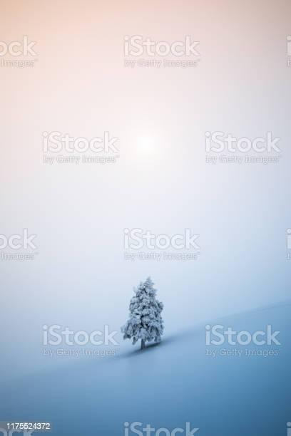 Christmas tree picture id1175524372?b=1&k=6&m=1175524372&s=612x612&h=doxh3uvzbk 6 gb4i  j cohtyuab0 1gkqg od0xta=