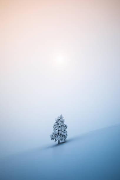 Weihnachtsbaum – Foto