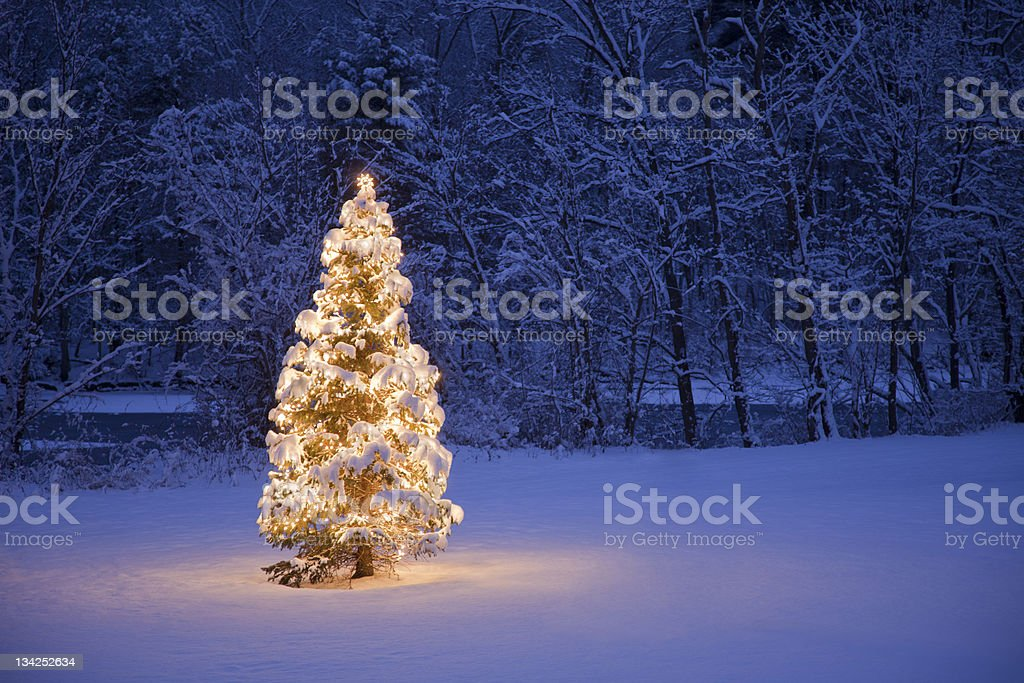 Christmas Tree A lite Christmas Tree in a field with a river and forest in the background in the morning Christmas Stock Photo