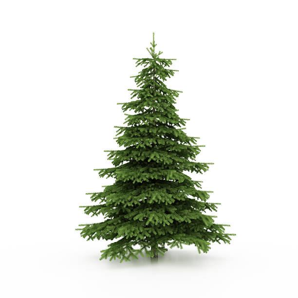 christmas tree - christmas tree stock photos and pictures