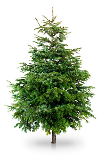 Christmas tree Christmas tree isolated on whiteChristmas and Winter collection! evergreen tree stock pictures, royalty-free photos & images