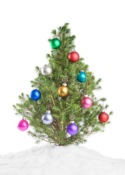christmas tree stock photo - Small Purple Christmas Tree
