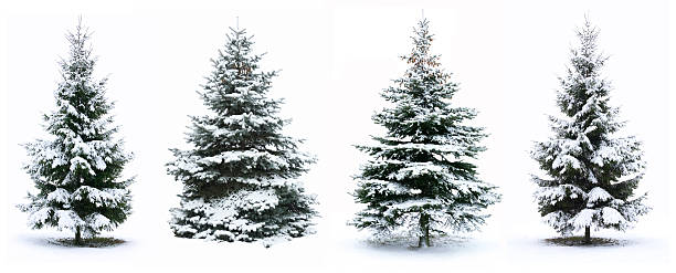 Christmas tree Christmas Tree - Isolated over White background fir tree stock pictures, royalty-free photos & images