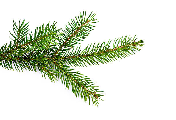 christmas tree - branch plant part stock pictures, royalty-free photos & images