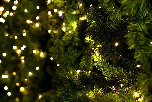 Christmas tree picture id487770994?b=1&k=6&m=487770994&s=612x612&w=0&h=3sze3ss9 qqzrmg q3j2rkpgds1idbpvpxrf lflens=