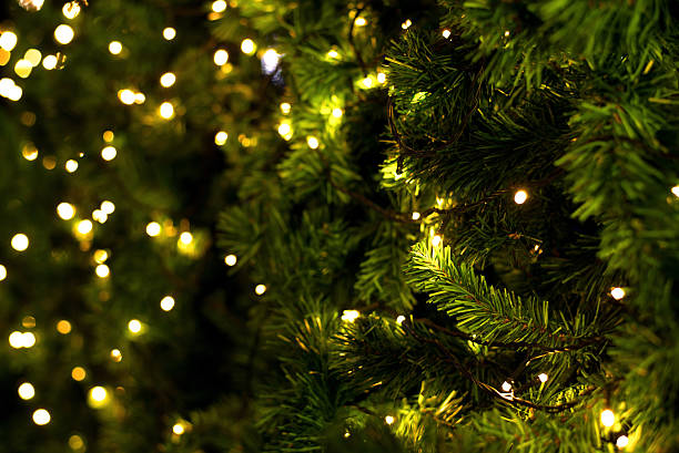 christmas tree - christmas green stock photos and pictures